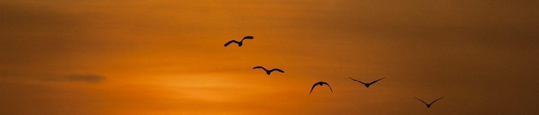 sunset-600095_1920